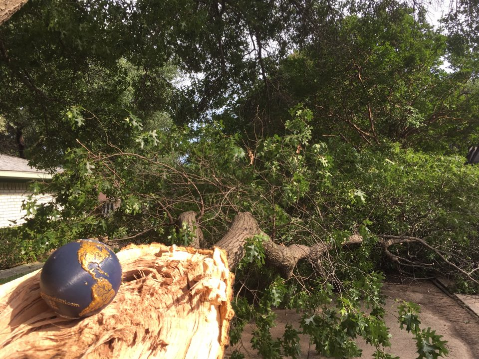Earth 22 with tree downed by storm